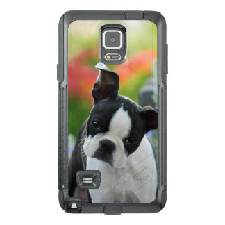 Boston Terrier Dog Cute Puppy Portrait - Cover