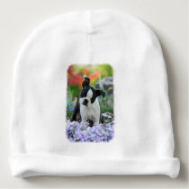 Boston Terrier Dog Cute Puppy Portrait Photo - hat