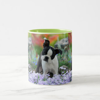 Boston Terrier Dog Cute Puppy Portrait Photo _ Two-Tone Coffee Mug
