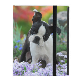 Boston Terrier Dog Cute Puppy, protective hardcase iPad Case