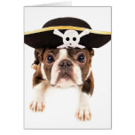 Boston Terrier Dog Dressed As A Pirate Cards