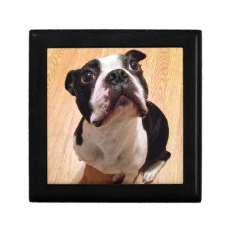 Boston Terrier Dog Gift Box