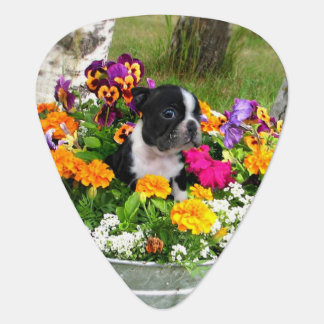 Boston Terrier dog Guitar Pick