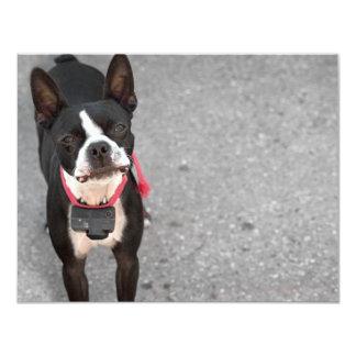 Boston Terrier Dog 4.25x5.5 Paper Invitation Card