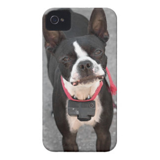 Boston Terrier Dog iPhone 4 Case-Mate Case