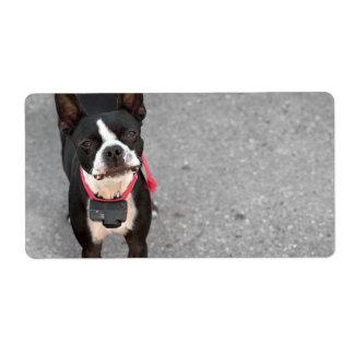 Boston Terrier Dog Label