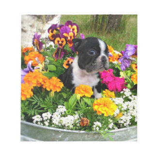 Boston Terrier dog Note Pad