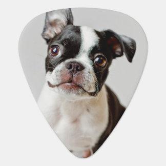 Boston Terrier dog puppy. Guitar Pick