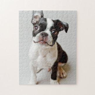 Boston Terrier dog puppy. Jigsaw Puzzle