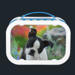 """Boston Terrier Dog Puppy Lunch Box<br><div class=""""desc"""">A young cute Boston Terrier female puppy, black with white markings, in a flowery garden. Boston Terriers, also called Boston Bulls or &quot;American Gentlemen&quot;, are a gentle, friendly and intelligent dog breed for companionship. The puppy-eyed doggy was photographed by Katho Menden, this lunch box is an enchanting gift idea for...</div>"""