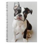 Boston Terrier dog puppy. Notebook