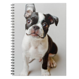 Boston Terrier dog puppy. Notebook