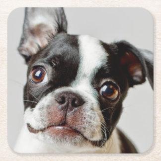 Boston Terrier dog puppy. Square Paper Coaster
