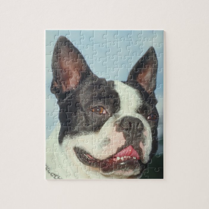 Boston Terrier Puzzle in Several Sizes with Personalization