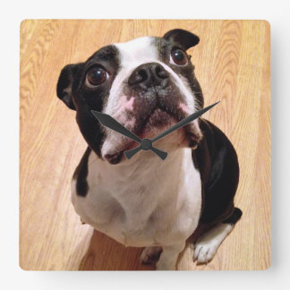 Boston Terrier Dog Square Wall Clock