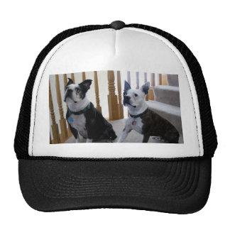 Boston Terrier dog Trucker Hat