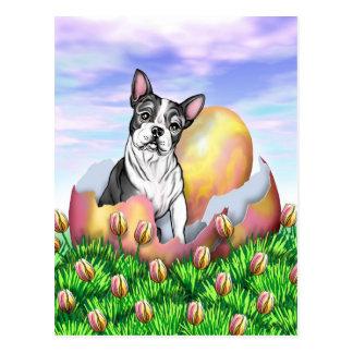 Boston Terrier Easter Surprise Postcard