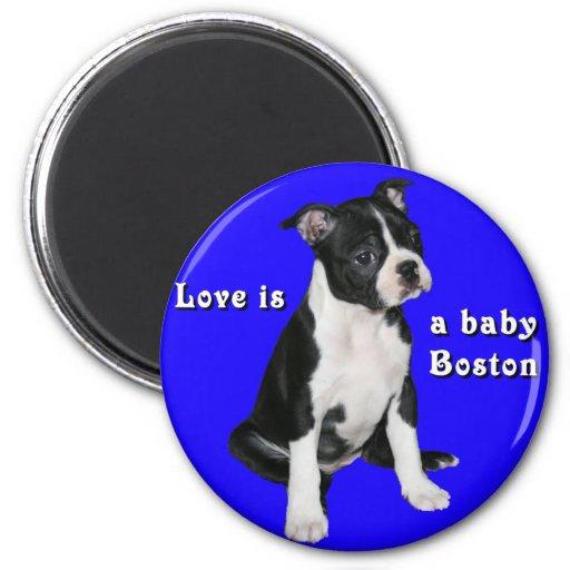 Boston Terrier:  El amor es un bebé Boston Imanes Para Frigoríficos