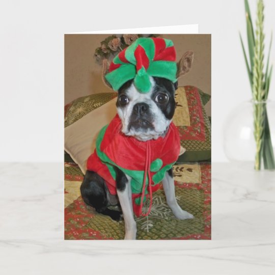 boston terrier elf christmas card