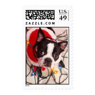 Boston Terrier en franqueo de las luces de navidad
