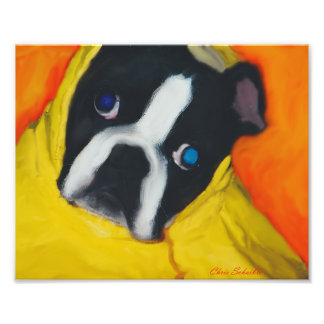 Boston Terrier en una capa de lluvia amarilla Fotografía