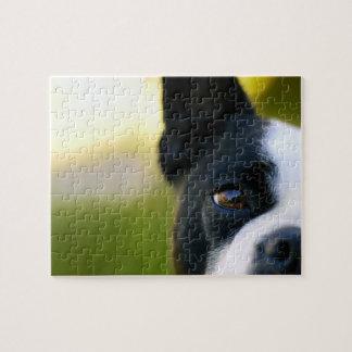 Boston Terrier Eye Dog Puzzle