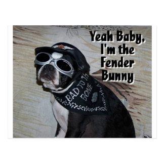 Boston Terrier:  Fender Bunny Postcard