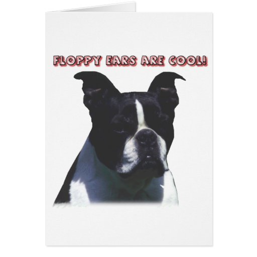Boston Terrier:  Floppy Ears are Cool! Cards
