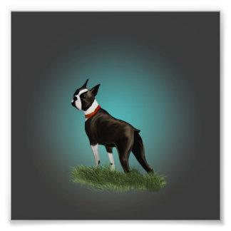 Boston Terrier Cojinete