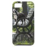 Boston Terrier Funda Para iPhone 5 Tough