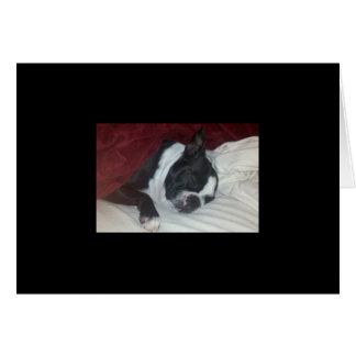 Boston Terrier Get Well Card