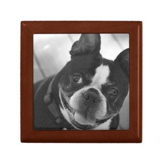 Boston terrier gift box