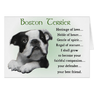 Boston Terrier Gifts Card