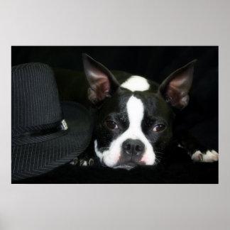 ¡Boston Terrier - gorras apagado a usted! Posters