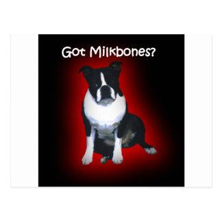 Boston Terrier:  Got Milkbones? Postcard