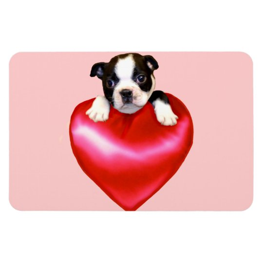 Boston terrier heart magnet