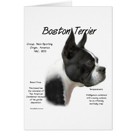 Boston Terrier History Design Card