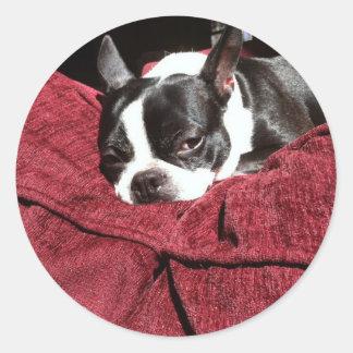 Boston Terrier Holly Classic Round Sticker