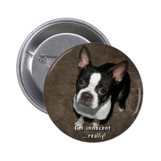 Boston Terrier:  I'm Innocent Buttons