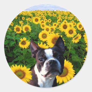 Boston Terrier in Sunflowers stickers