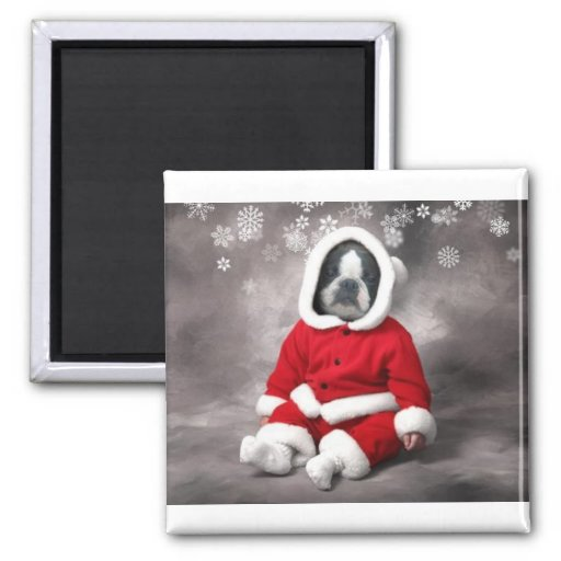 BOSTON TERRIER IN XMAS OUTFIT 2 INCH SQUARE MAGNET