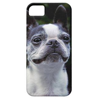 Boston Terrier iphone 5 Case