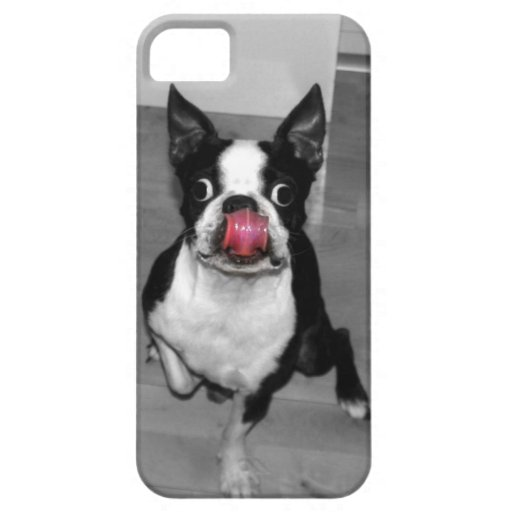 Boston Terrier Iphone 5s Case iPhone 5 Cover