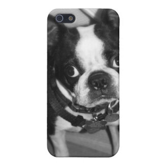Boston Terrier Iphone Case iPhone 5 Covers