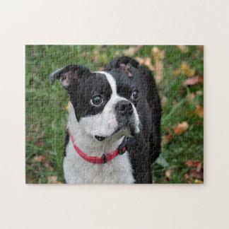 Boston terrier jigsaw puzzle
