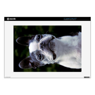 Boston Terrier Laptop Skin