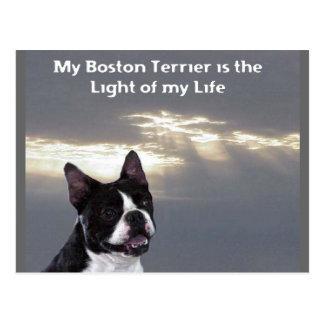 Boston Terrier:  Light of my Life Postcard