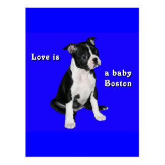 Boston Terrier:  Love is a Baby Boston Postcard