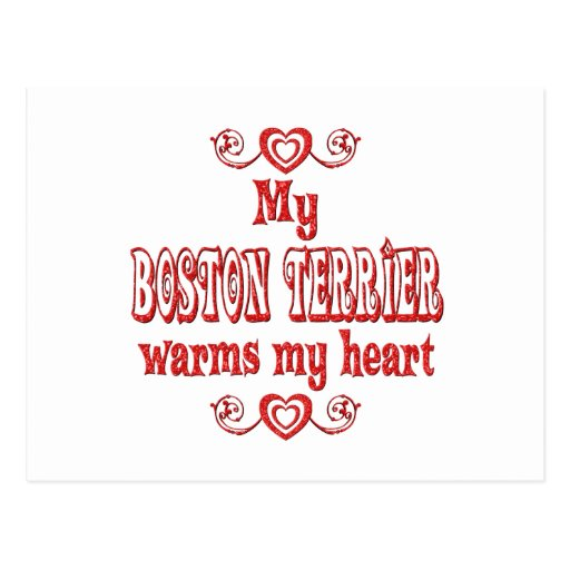 BOSTON TERRIER Love Postcard
