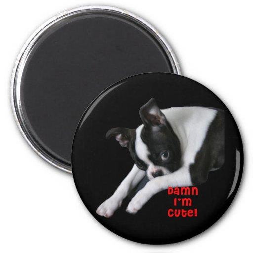 Boston Terrier: Maldición soy lindo Iman De Nevera